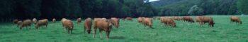 GAEC DE L' AVIOT - Vente de viande en colis - 55500 - Saulvaux